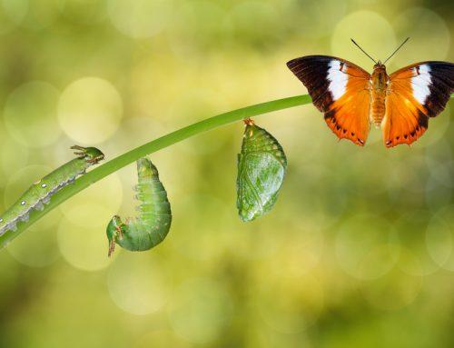 Sinnvolles Wachstum – was bedeutet das überhaupt? (Teil 1)