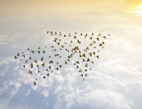 Sinnvolles Wachstum – was bedeutet das überhaupt? (Teil 2)